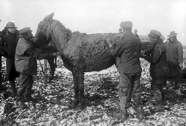 British troopsscraping mud from a mule near Bernafay Wood on the Western Front, 1916
