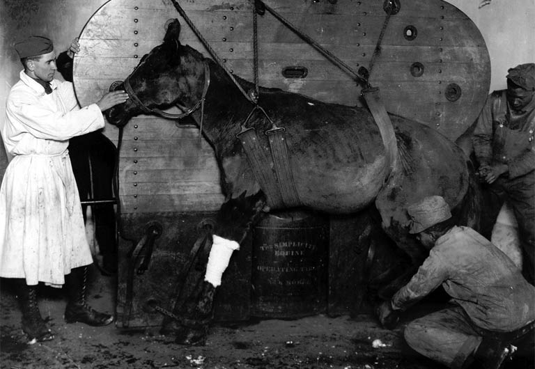 A horse strapped and being lowered into position to be operated on for gunshot wounds by 1st Lt Burgett. Le Valdahon, France. (CC by Otis Historical Archives)
